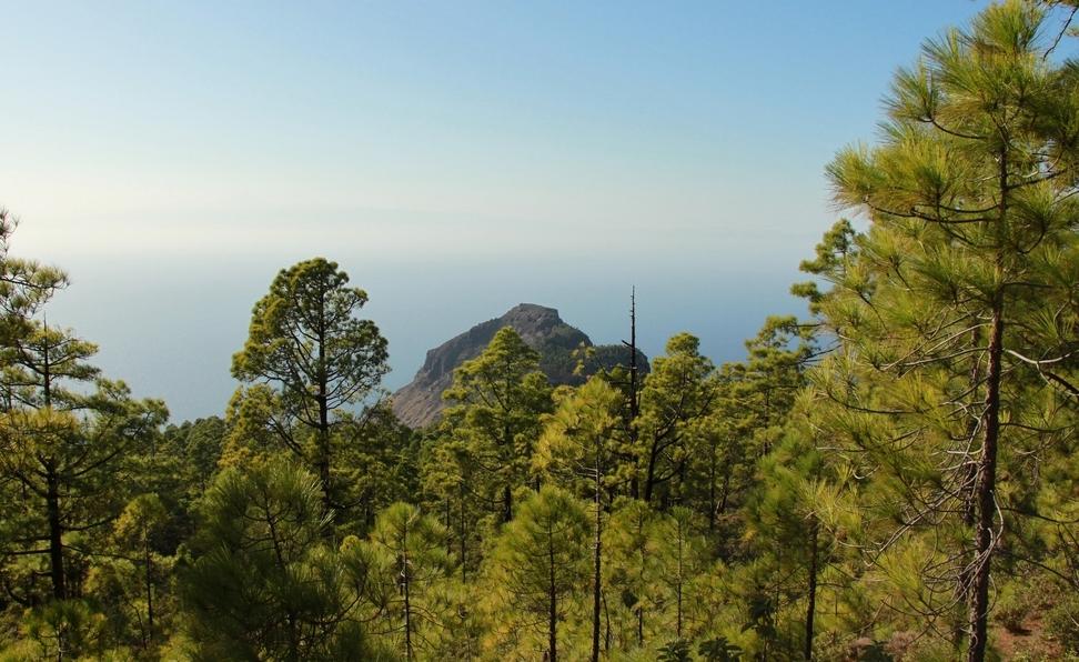 Forêt du parc naturel de Tamadabe sur Grande Canarie