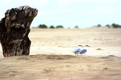 Deux mouettes sur une plage de sable.