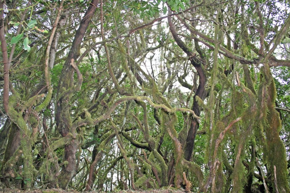 Vue d'une forêt sur l'île de la Gomera aux Canaries en Espagne.