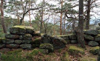 Dans une forêt des Vosges.