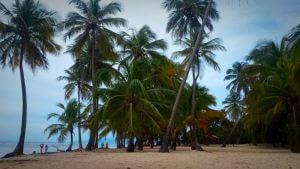 Vue d'une plage avec palmiers à la Guadeloupe.