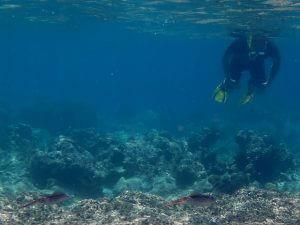 Vue d'un plongeur dans la mer à la Guadeloupe.