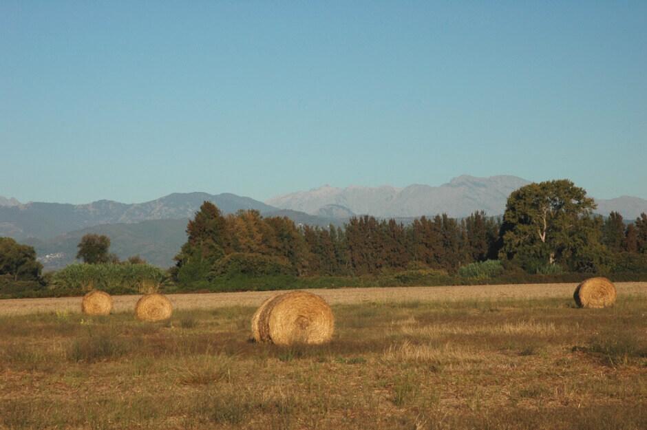 Meules de foin dans un champ en Corse.