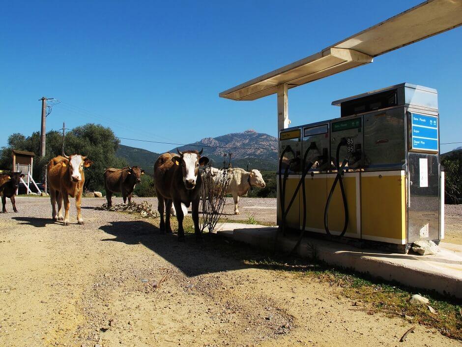 Vue d'une station-service avec des vaches en Corse.