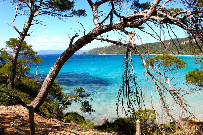 Vue des pins et des eaux turquoises de la plage de Porquerolles.