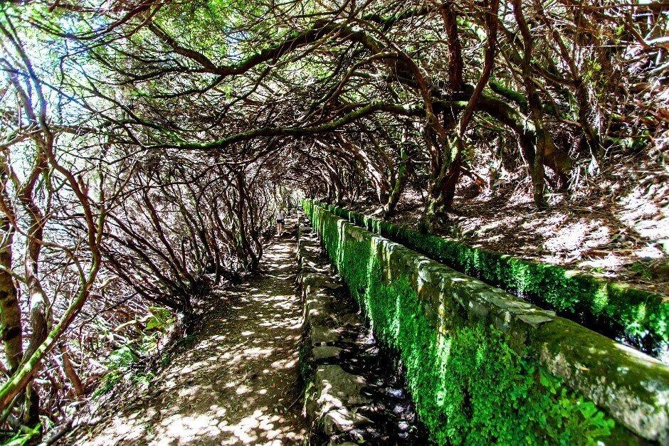 Vue d'un canal d'irrigation au milieu d'une forêt à Madère.