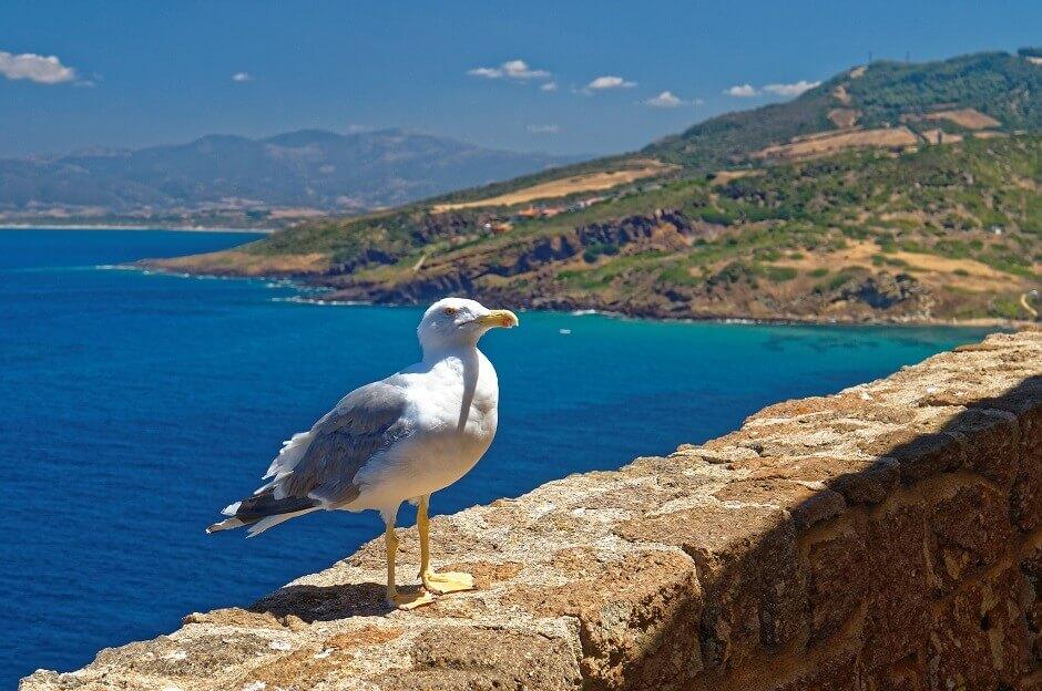 Vue d'une mouette posée sur un mur surplombant la mer en Sardaigne.