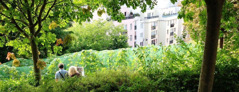 Vue d'un petit vignoble à Paris.