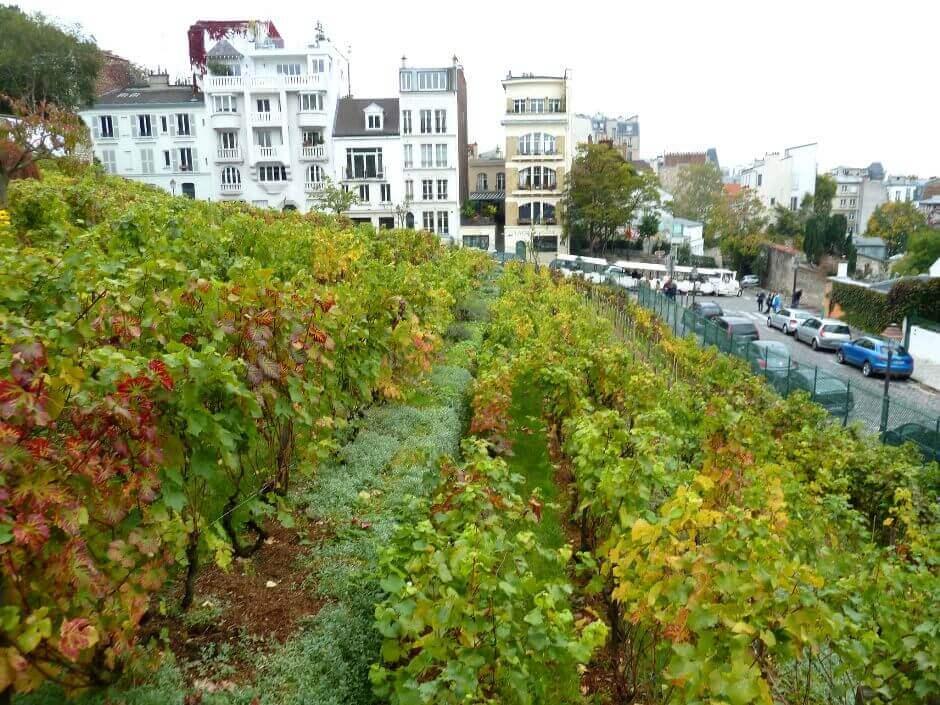 Vue d'un vignoble à Paris.
