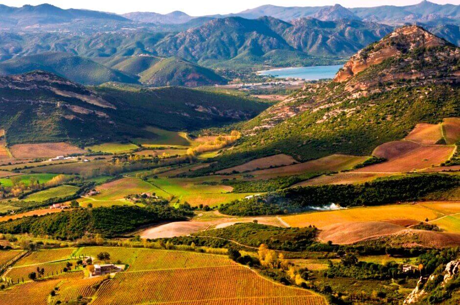 Vue plongeante sur un vignoble entouré de montagnes en Corse.