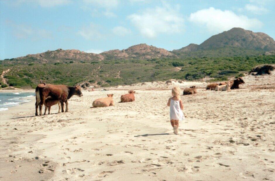 Vue d'une plage de sable en Corse où marche une petite fille et où paissent des vaches.