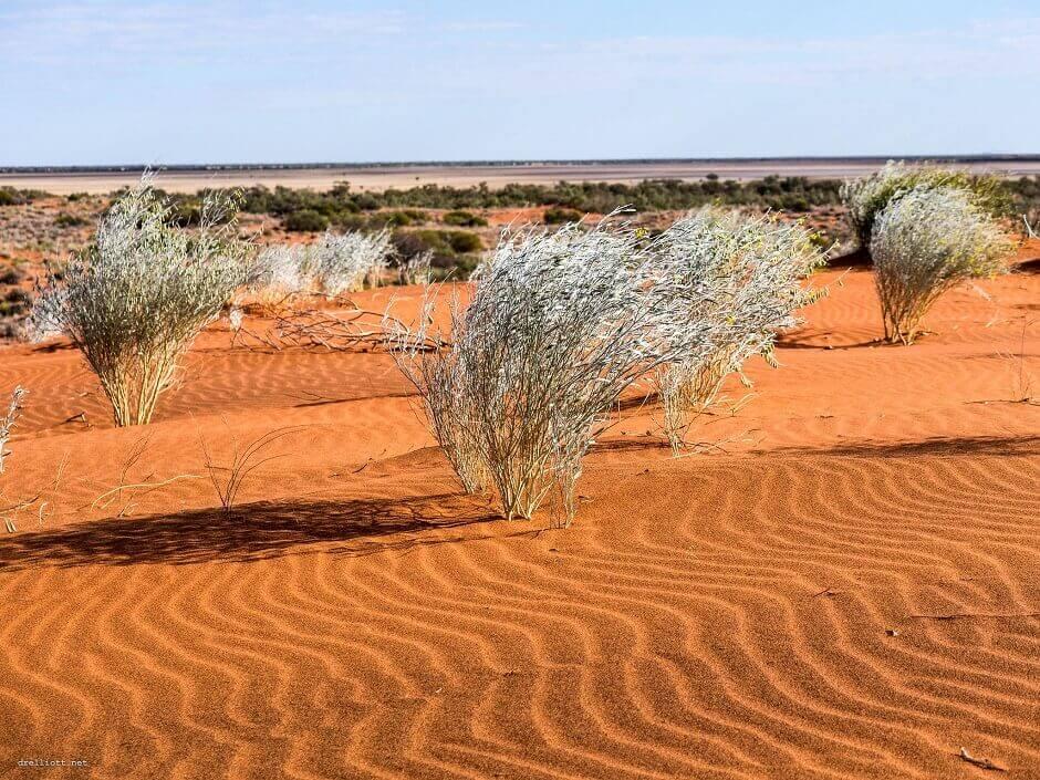 Vue d'un désert de sable rouge en Australie.