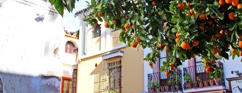 Un oranger en Andalousie.