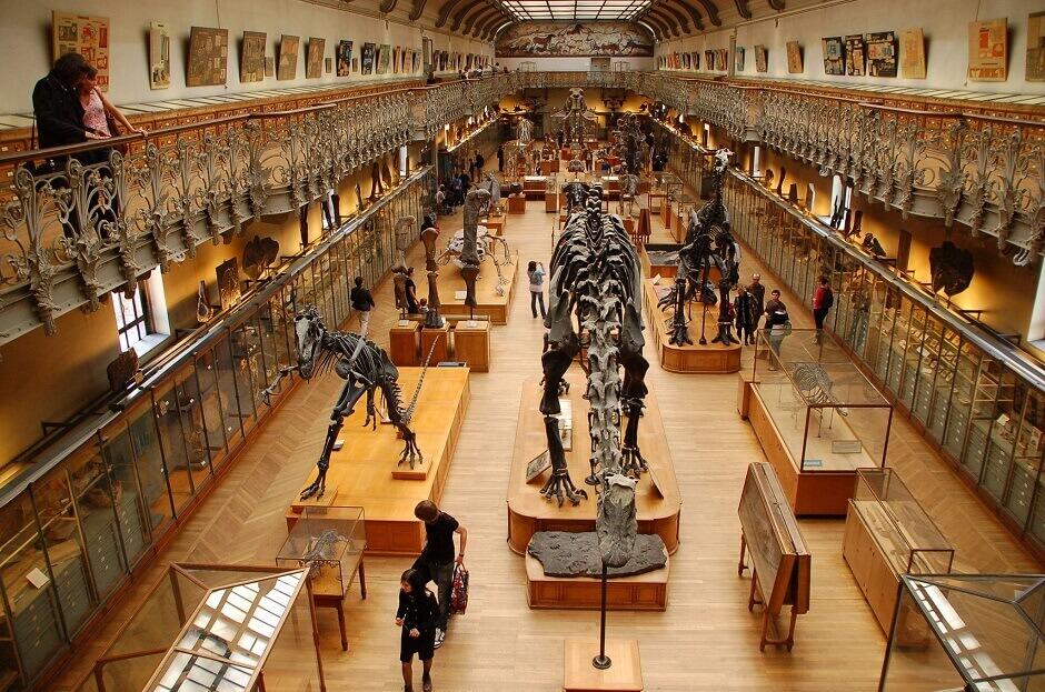 Intérieur du Muséum d'histoire naturelle de Paris.