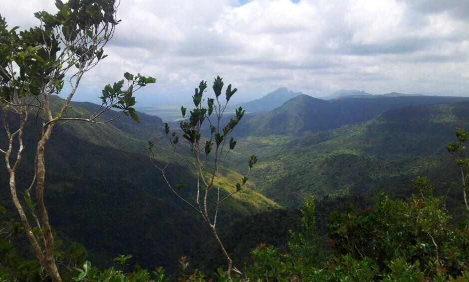 Forêt à l'île Maurice.