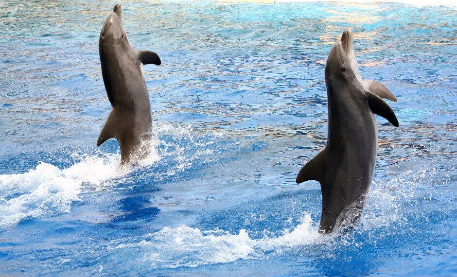 Deux dauphins sautant hors de l'eau.