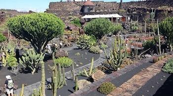 Jardin de cactus à Lanzarote.