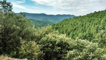 Forêt et montagne dans les Cévennes.