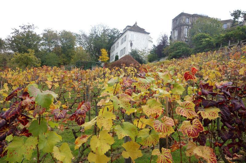 Vignoble de Montmartre, à Paris.
