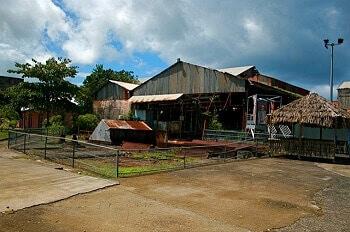 Plantation sucrière en Guadeloupe.