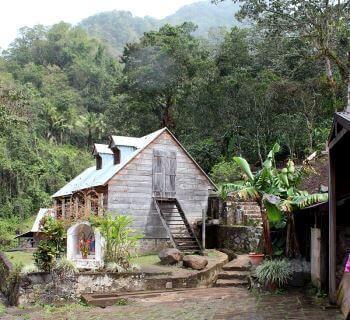 Une exploitation caféière en Guadeloupe.