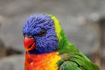 Oiseau multicolore.