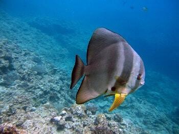 Spot de plongée en Guadeloupe.