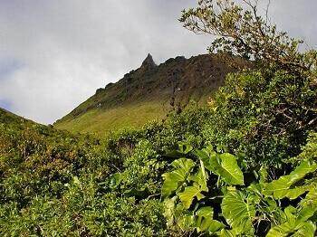 Le volcan de la Soufrière en Guadeloupe.