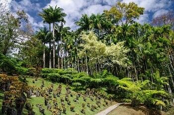 Jardin botanique en Martinique.