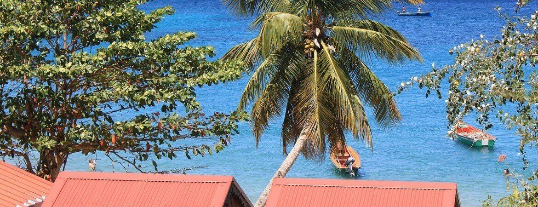 Mer et palmiers en Martinique.