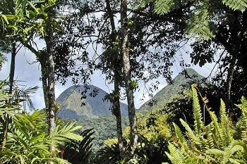 Montagnes et forêt en Martinique.