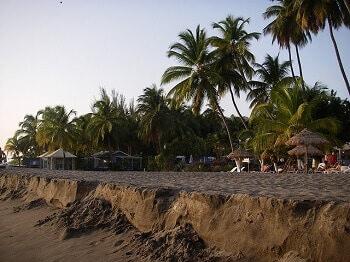 Plage et palmiers à la Martinique.