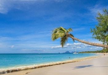 Plage et cocotier en Martinique.
