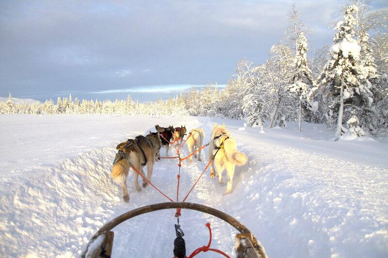 Traineau en Laponie.