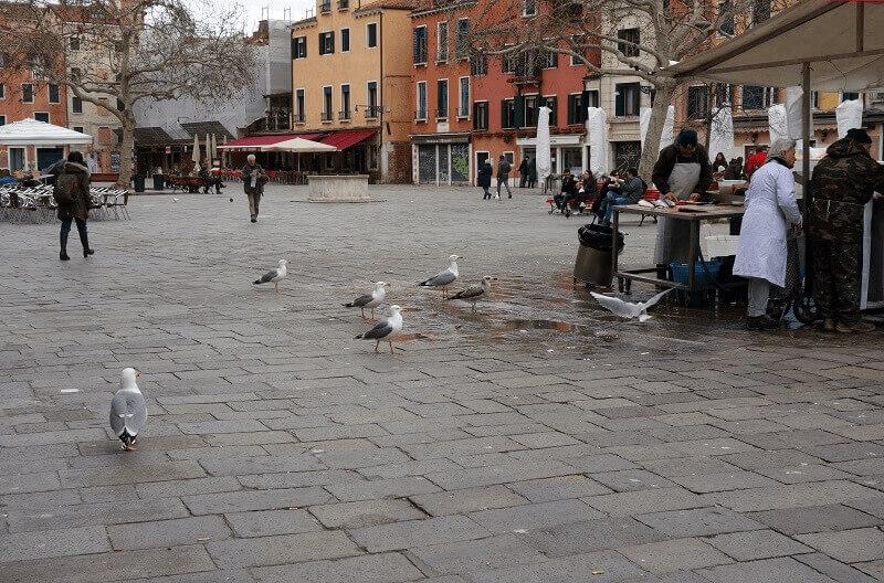 Place et pigeons à Venise.