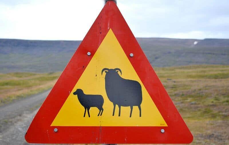 Panneau de signalisation en Islande.