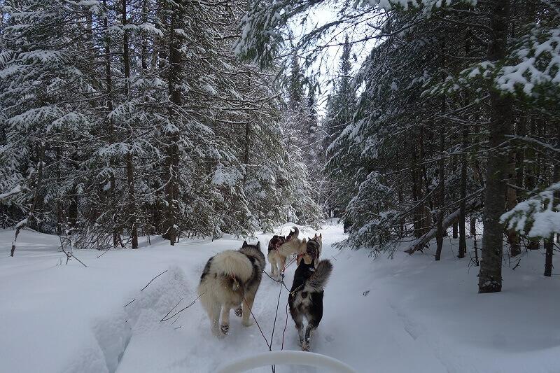 Un traîneau dans une forêt au Canada.
