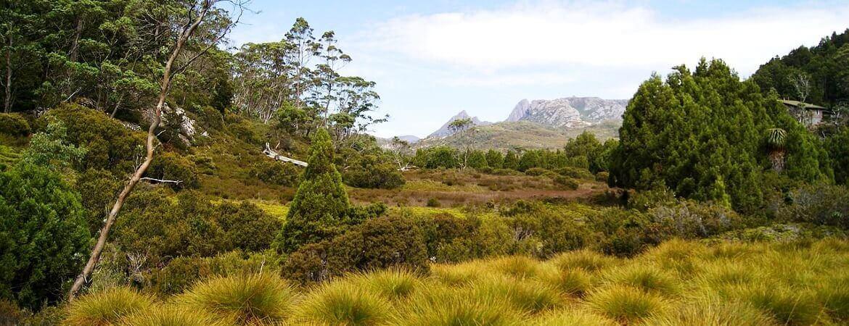 Paysage de montagne en Tasmanie.