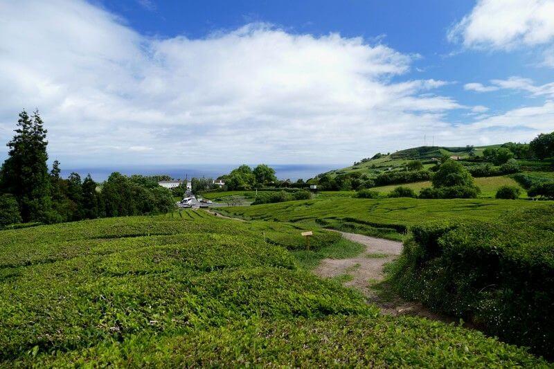 Paysage des Açores.