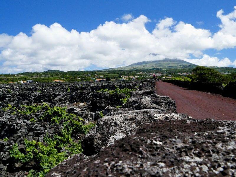 Un vignoble aux Açores.