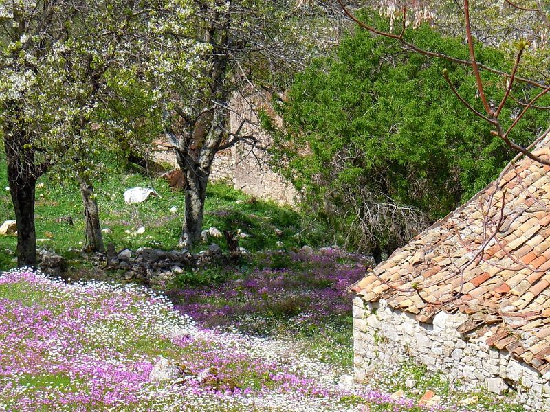 Arbres et fleurs à Corfou.