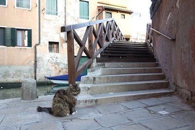 Gros chat devant un pont à Venise.