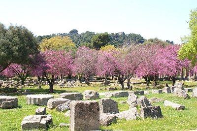 Arbres en fleur à Olympie en Grèce.