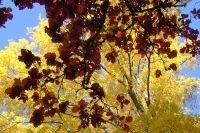 Cime des arbres du par de la Fosse