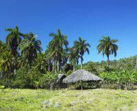 Palmier et abris du Parc national de Baconao