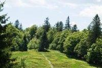 Arbres de la réserve Naturelle du Massif du Ventron