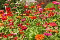 Fleurs colorées du Parc Naturel Régional des Caps et Marais d'Opale
