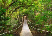 Passerelle entre les arbres du Parc national de Khao Yai