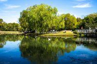 Étendue d'eau et arbre du parc naturel régional du Morvan