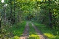 Chemin au milieu du Parc naturel régional de la Brenne